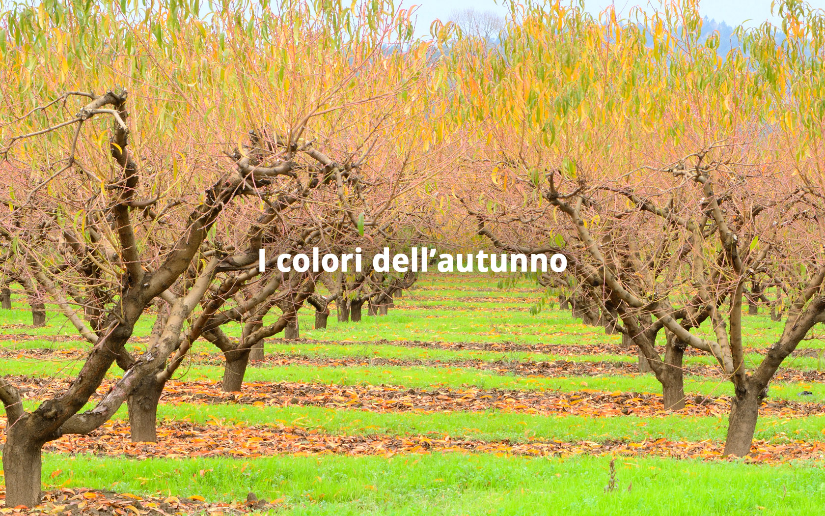 Commerciofrutta Slide Hp autunno